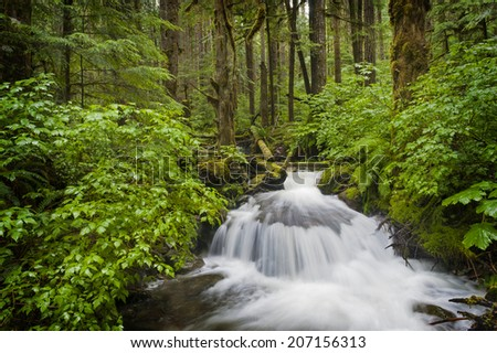 Rainforest Creek. This idyllic small stream meanders through a rainforest environment in the Mt. Baker National Forest near the scenic Nooksack Falls in western Washington state. - stock photo