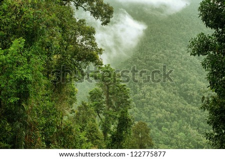 rainforest gorge in North Queensland, Australia - stock photo