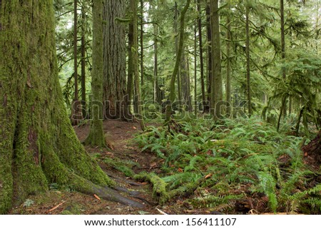 Rainforest in British Columbia, Canada - stock photo