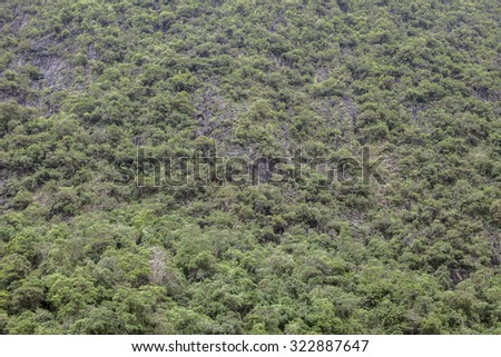 rainforest in the Phang Nga,Tropical forests, mountains, rocks, for natural background - stock photo