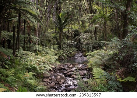 Rainforest, New Zealand - stock photo