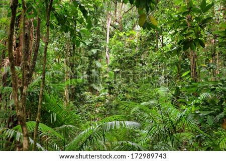 rainforest scenery in Queensland, Australia - stock photo