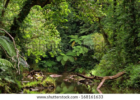 rainforest scenery with creek in North Queensland, Australia - stock photo