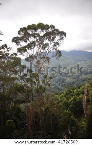 Rainforest trees - stock photo