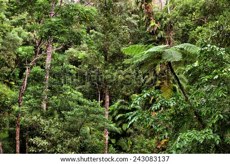 rainforest view - stock photo