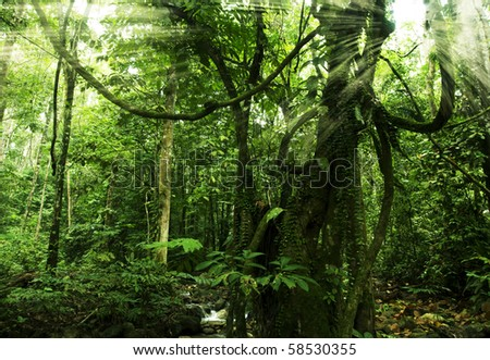 rainforest with morning sunlight - stock photo