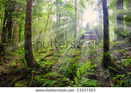 rainforest with sun rays and flare - stock photo