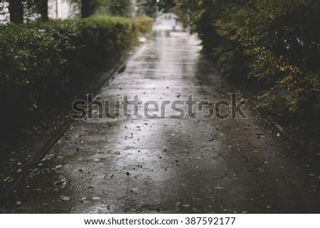 rainy day,selective focus on the nearest part, great DOF 1,2 - stock photo
