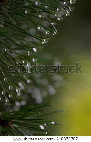 rainy plants background - stock photo