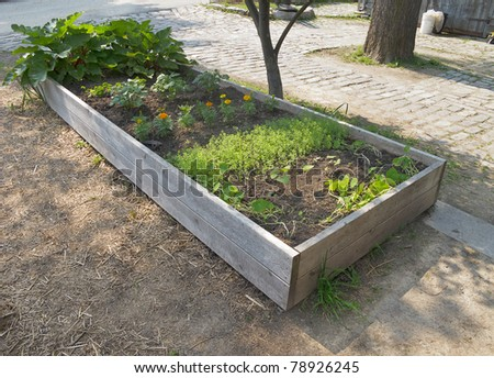 Raised garden bed with rhubarb and seedlings - stock photo