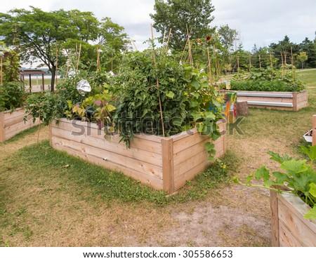 Raised garden beds in community garden - stock photo