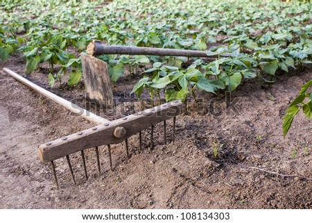 rake and hoe on farm,beans plantation background - stock photo