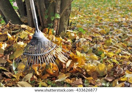 rake in golden dead leaves in garden  - stock photo