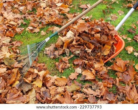 Raking fallen maple leaves with green metal rake and red plastic shovel - stock photo