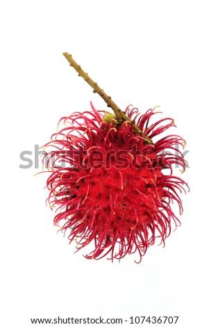 Rambutan fruit isolated on white backgroun - stock photo