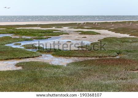 Ramsar Protected Area at Walvis Bay Lagoon, Namibia, Africa - stock photo