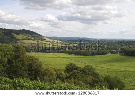 Range of hills the North Downs at Dorking. Surrey. England. With vineyard in foreground - stock photo