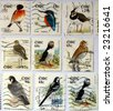Range of Irish postage stamps with birds - stock photo