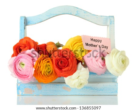 Ranunculus (persian buttercups) for mothers day, isolated on white - stock photo