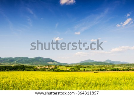 rape field and blue sky - stock photo