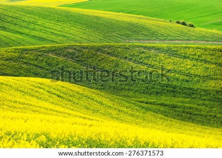 Rape field waves, South Moravia, Czech Republic - stock photo