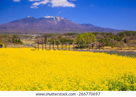 Rape flowers and Mt. Yatsugatake, Yamanashi, Japan - stock photo