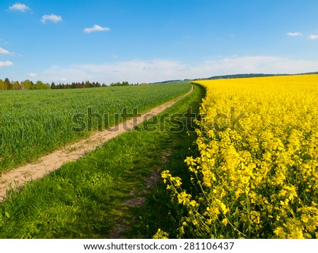 Rape plant field and country road on it's edge, typical czech spring landscape with color combination of green, blue and yellow  - stock photo