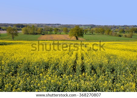 Rapeseed (Brassica napus) field in the centre region in France - stock photo