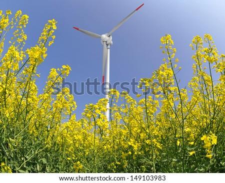rapeseed field with wind turbine - stock photo
