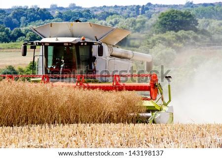 rapeseed harvest - stock photo