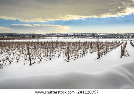 Rare picture of Apuglia landscape with snow. Vineyard in winter - stock photo