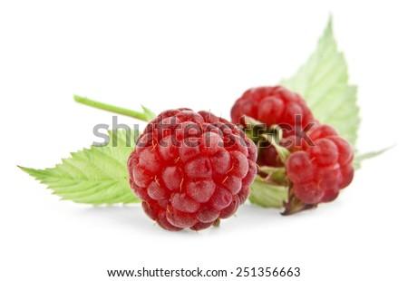 raspberry on a white background - stock photo