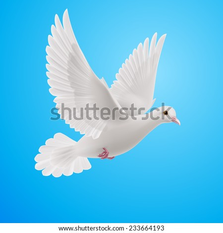 Raster version. Realistic white dove on blue background. Symbol of peace  - stock photo