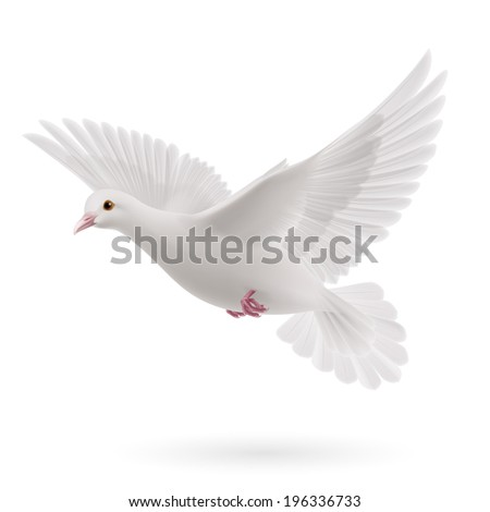 Raster version. Realistic white dove on white background. Symbol of peace - stock photo