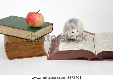 rat on open book next to a stack of books with apple, isolated an white background - stock photo