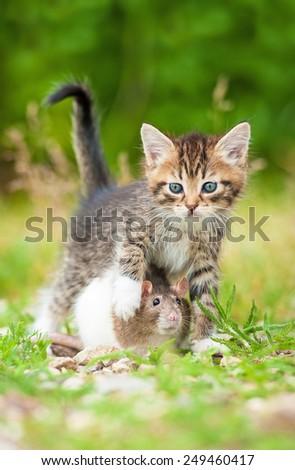 Rat sitting under little kitten - stock photo