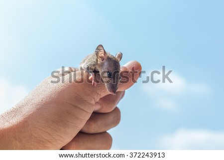 rats in hand. blue sky background. - stock photo