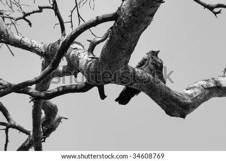 Raven in the tree - stock photo