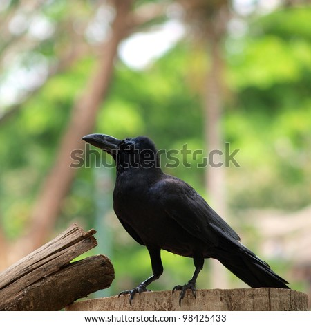 raven sitting on a wood - stock photo