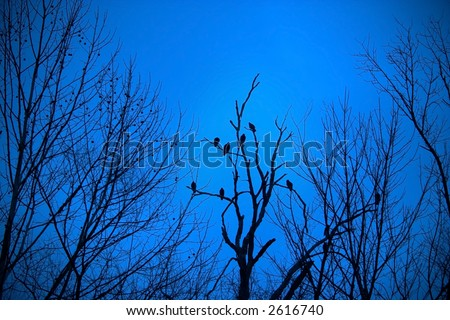 Ravens and stark trees silhouetted against a twilight deep blue sky.  Ominous and dark, almost gothic in look. - stock photo