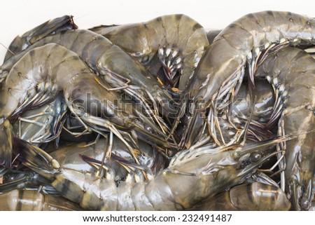 Raw black tiger shrimps on white background - stock photo