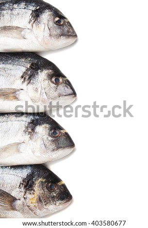 Raw bream or Sparus Aurata fish over white background - stock photo