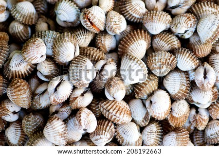 Raw Clams in the fish market in Ho Chi Minh CIty in Vietnam - stock photo