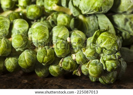 Raw Green Organic Brussel Sprouts on the Stalk - stock photo