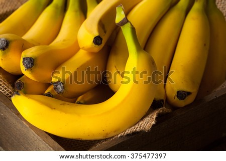 Raw Organic Bunch of Bananas Ready to Eat - stock photo