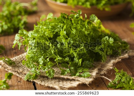Raw Organic French Parsley Chervil on a Background - stock photo