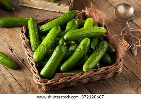 Raw Organic Mini Baby Cucumbers Ready to Eat - stock photo