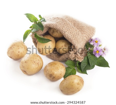 Raw potatoes isolated on white background - stock photo