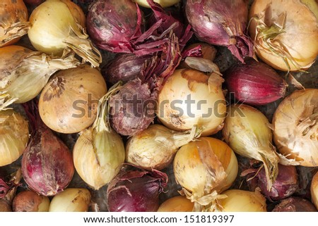 Raw red and white onion on the counter - stock photo