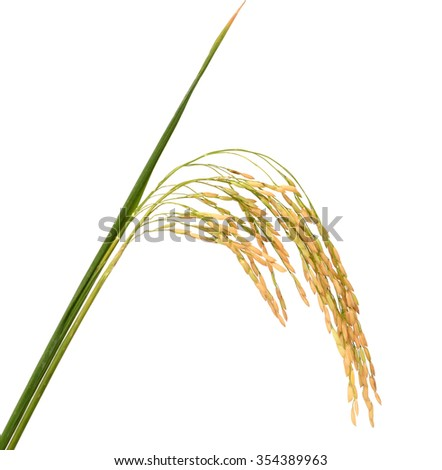 Raw rice, Selection Of black rice white rice and paddy rice - stock photo